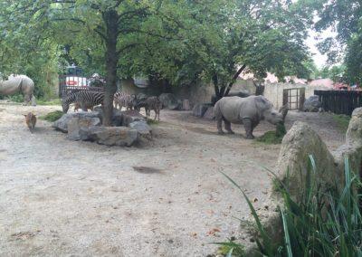 zoo-osnabru%cc%88ck-2014-13