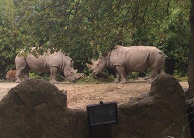 zoo-osnabru%cc%88ck-2014-14