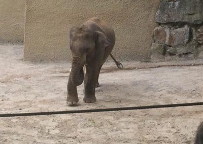 zoo-osnabru%cc%88ck-2014-15