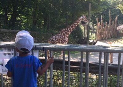 zoo-osnabru%cc%88ck-2014-3