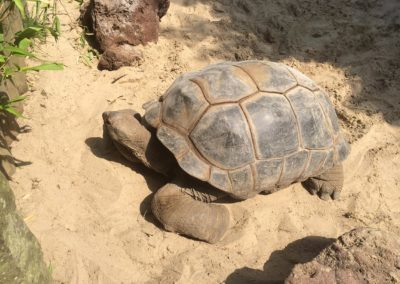 zoo-osnabru%cc%88ck-2014-7