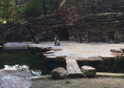 zoo-osnabru%cc%88ck-2014-8
